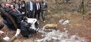 Kızılcahamam'da tedavileri yapılan yaban hayvanları doğaya bırakıldı