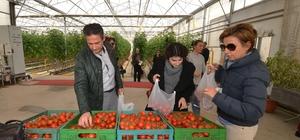 Mamak çöplüğünün seralarında hormonsuz domates, biber, salatalık yetişiyor