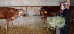 Hayvancılık destekleri KOP'la tabana yayılıyor