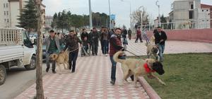 Suluova'da Hollanda'yı kangal köpekleri ile protesto ettiler