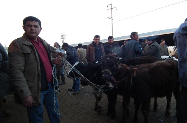Efeler hayvan pazarına yoğun ilgi