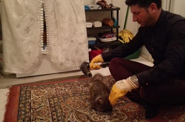 Tüylerine yapıştırıcı sürülen kediye duyarlı vatandaş sahip çıktı