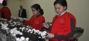 Öğrenciler okulda mantar yetiştiriyor