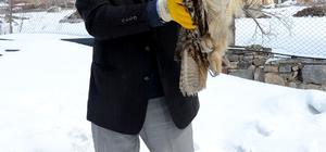 Yaralı puhu kuşu tedavi edilecek