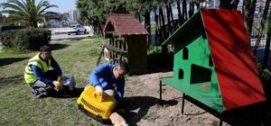 Karşıyaka'da 'evsiz' kedi kalmayacak
