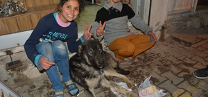 Suriyeli kardeşler hasta köpeğe sahip çıktı