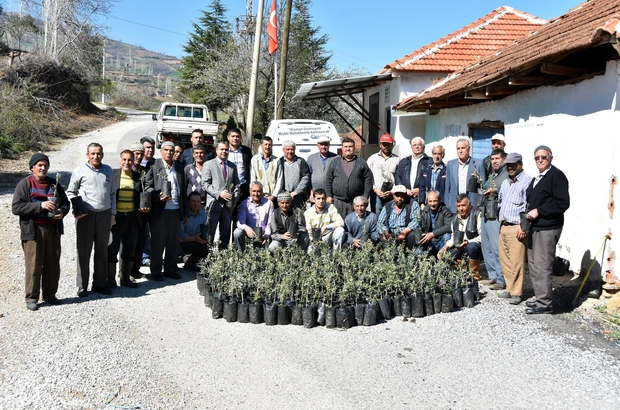 Salihli Belediyesinden çiftçiye fidan desteği