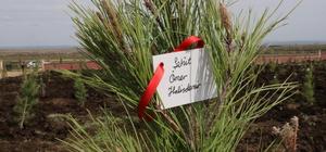 Şanlıurfa'da 15 Temmuz şehitleri adına fidan dikildi