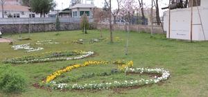 Kayapınar'a 80 bin kış çiçeği ekildi