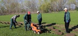 Edirne Belediyesi çimini kendi üretiyor
