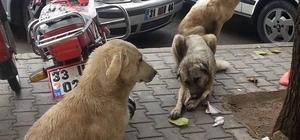 Sokak köpeklerinden vatandaş da belediye de dertli