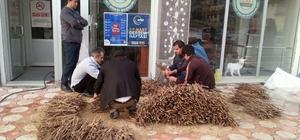 20 bin adet üzüm kalemi Amerikan asma ağacına aşılatmak üzere Tekirdağ'a gönderildi