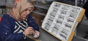 Hem ülke hem de Yozgat ekonomisine katkı sağlıyorlar