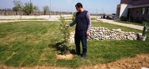 Sarıgöl'de okul bahçesine 350 fidan dikildi