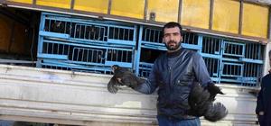 Varto'da tavuk satışı