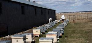 Aşırı soğuklar arıları telef etti