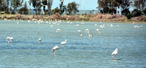 Aliağa Kuş Cennetinden kartpostallık görüntüler