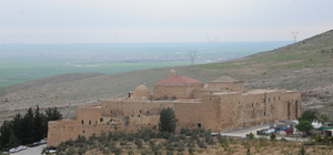 Mardin'de dostluk ve barış için zeytin fidanı dikildi