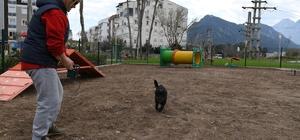 Köpek Oyun Parkının üçüncüsü Liman'a