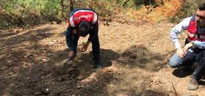 Adana'da 40 bin kök Hint keneviri ele geçirildi