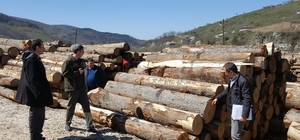 Yığılca'da orman ürünleri depoları denetlendi