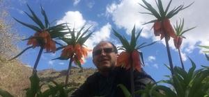 Hakkari'de ters laleler çiçek açtı