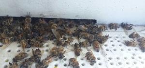 Ortaca'da 200 kovan arı telef oldu