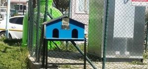 Sokak kedileri için yeni kedi evleri yerleştirilmeye başlandı