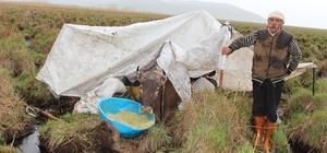Bataklığa saplanan inek kurtarılmayı bekliyor