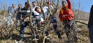 Bitlis'te 10 bin bıttım ağacı aşılanacak