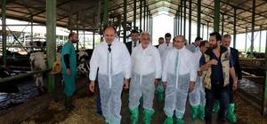 Vali Demirtaş, dev hibe alan damızlık düve çiftliğini ziyaret etti