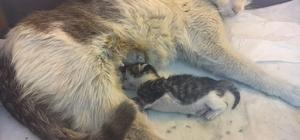 Hamile kedi için seferber oldular