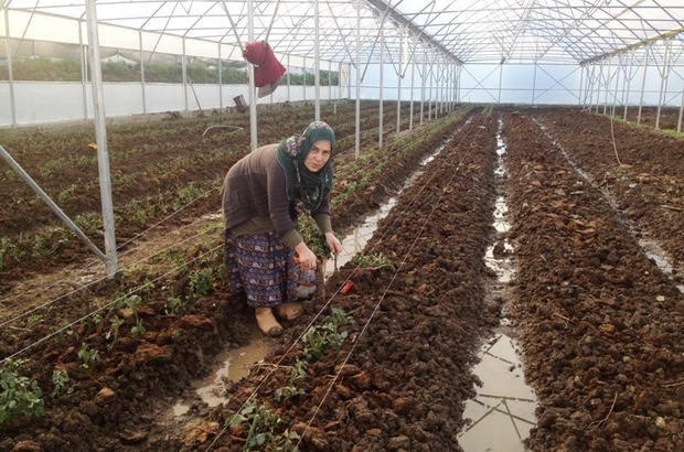 Samsun'da Genç Çiftçi desteği alanlardan yüzde 76'sı kadın