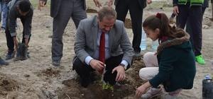 Adilcevaz'da 150 aşılı ceviz fidanı toprakla buluştu