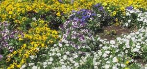 Erken baharla birlikte açan çiçekler rengarenk görüntülere neden oluyor