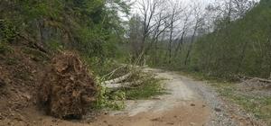 Trabzon'daki şiddetli rüzgar