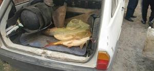 Beyşehir'de elektro şok ile avlanan balıklar ele geçirildi