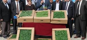 Elazığ'da çiftçilere çeşitli bitkiler dağıtıldı