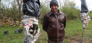 Donla mücadele için ağaçları poşet ve gazete ile sarıyorlar