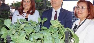 Aydın'da 70 bin adet yerli tohum fide dağıtımı yapıldı
