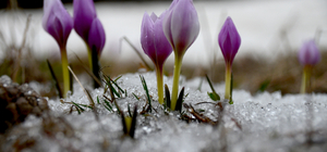 """""""Karlar erimeden"""" ilkbahar gelmiyor"""