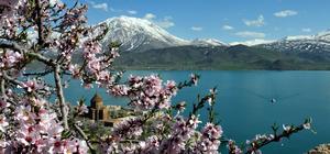 Akdamar Adası çiçeklere büründü
