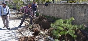Muş Belediyesinden yeşillendirme çalışması
