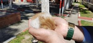tık su borusuna sıkışan yavru kediyi itfaiye kurtardı