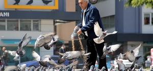 Her gün kilolarca yem satın alıp yabani güvercinleri besliyor
