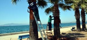 Aliağa'da palmiyelere bahar makyajı