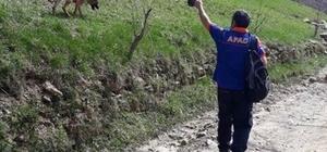 Afad ekipleri, Hizanda kayıp genci arıyor