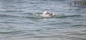 Sapanca gölünde yüzenler tehlike oluşturmaya başladı