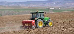 Sorgun'da nohut ekimi artıyor