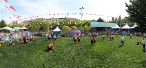 7'nci Geleneksel Sultangazi Belediyesi Yağlı Güreşleri başlıyor